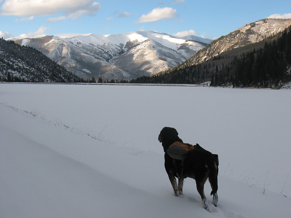 rottweiler winter pack at smith and moorehouse reservoir facing windy ridge Uinta mountains Utah